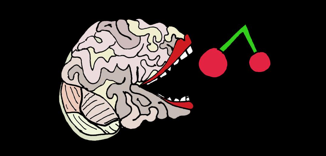 Brainfood: Vorträge und Inputreferate, Science Transfer   brainability